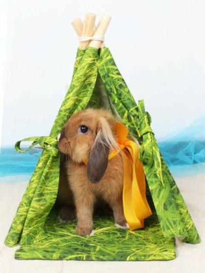 Tipi mascota mini modelo Green Grass